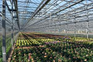 Metrolina Greenhouses